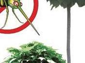 zanzare sono agguato... armiamoci: