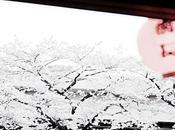 bianca, buona Pasqua white, Happy Easter