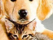 regole sistema immunitario efficace cane gatto