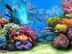 Trasformare desktop acquario tropicale animato