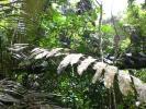 General Mills sgancia dalla distruzione della foresta pluviale
