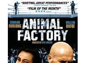 Animal Factory Steve Buscemi