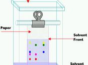 Cromatografia carta: caccia pigmenti nascosti