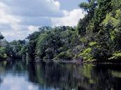Nuovo codice forestale Brasile: Greenpeace appella presidente Rousseff