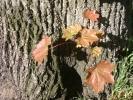 Stoccarda, guerra degli alberi