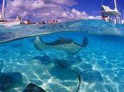 Isole Cayman, paradiso