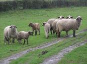 Alivertu colonizatzione pastore (parte prima)