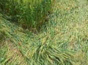 Scoperto crop circle Forli-Cesena