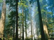banca centrale forestale conservazione patrimonio arboreo