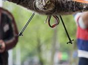 Trasforma gatto morto elicottero