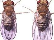 Esercizi soluzioni occhi della Drosophila