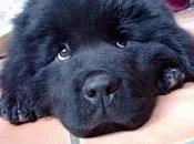 Tema: cane vorrei avuto