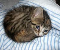 Campagna estiva contro abbandoni: l'abbandono gatti