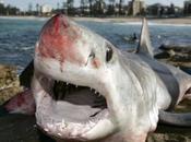 Agrigento: Leone pescato squalo Mako. Sicilia arrivano squali?