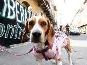 Montichiari, sequestrato Green Hill, l'allevamento cani vivisezione