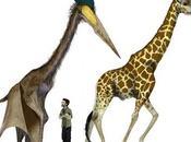 Pterosauri erano viaggiatori record