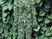 Pinterest inspiration_ pruning