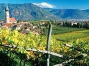 Enologia ricerca Alto Adige