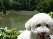 Cani Central Park York