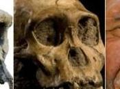 Homo Denisova sequenza completa genoma Denisovani svela famiglia umana