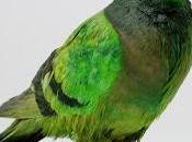Così piccioni colorati diventano opere d'arte