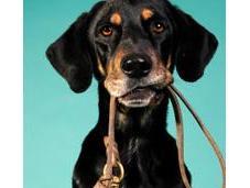 Portare spasso cane: ideale mantenersi forma