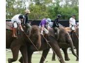 Thailandia: gara polo elefanti. Ecco King's Elephant