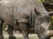 Vietnam, caso rinoceronti
