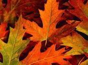 Autumn here!