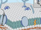 proteine: forma funzione