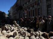 Pecore Madrid: Fiesta Nacional Trashumancia