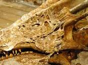 Draghi, mostri, dinosauri oceani… Lombardia