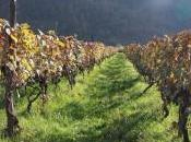 Recensione vino Khvanchkara, rosso aperitivo