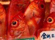 Fukushima: alti livelli radioattività pesce