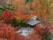 "tempo fino novembre ammirare ""fall foliage"" Giardini botanici Sissi"
