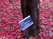 Sotto l'albero Momotaro