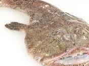rana pescatrice Igles Corelli
