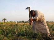 Mille orti Africa: lezioni africoltura