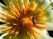 terza dimensione della flora.