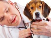 Aggressioni veterinari, solidarietà dell'Italia Valori