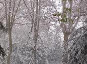 Novara sotto neve 2012