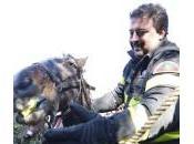 Roma, vigili fuoco salvano cavallo: finito fiume Aniene