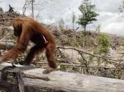 francia propone supertassa sull'olio palma