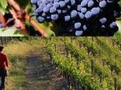 Recensione dell'Assisi Rosso, vino corposo armonico