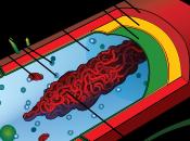 Cellula eucariote cellula procariote: genoma confronto