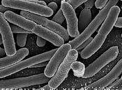 cellula, teoria cellulare l'effetto scala