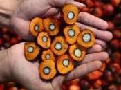 Olio palma: controversie salute l'ambiente