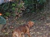 Bologna, cacciatore ferito Cinghiale abbattuto quartiere Saragozza
