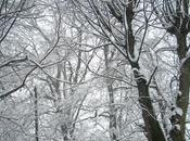 Sotto neve, pane...