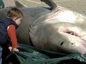 Sudafrica Condannato pescatore aveva ucciso squalo bianco